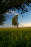 Lonely tree on the huge meadow Royalty Free Stock Photography