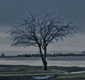 A lonely tree Royalty Free Stock Images