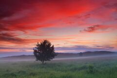 Free Lonely Tree In A Field At Sunset. Beautiful Summer Landscape Stock Photos - 175365053