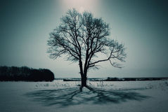 Free Lonely Tree In A Field In Winter Royalty Free Stock Photo - 45557425