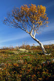 Lonely Tree In Mountain Royalty Free Stock Photography