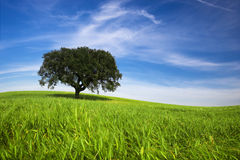 Lonely Tree In Spring Landscape Stock Photography