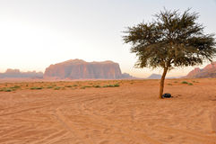 Lonely Tree In Wadi Rum (Jordan) Stock Photo