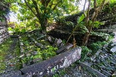 Lonely tree inside Nan Madol: walls, and moat made of large basalt slabs, overgrown ruins in jungle, Pohnpei, Micronesia, Oceania. stock photography