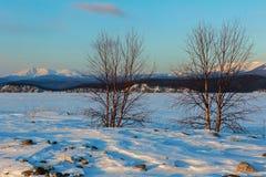 Lonely tree on the island Lohmaty. Stock Image
