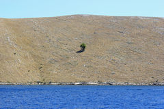 Lonely tree island - mediterranean landscape Stock Images