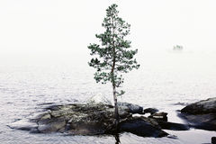 Lonely tree on island Royalty Free Stock Images