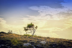 Lonely tree on the island Royalty Free Stock Photo