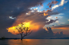 Lonely tree at Koh Mak Royalty Free Stock Photos
