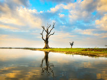 Lonely tree on a lake Stock Photos