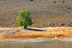 Lonely tree by the lake at Bridgeport Stock Photo