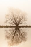 Lonely tree by the lake at dawn Stock Image