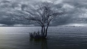 Lonely tree on the lake Royalty Free Stock Images
