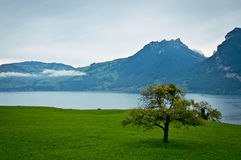 Lonely tree by the lake in the mountains. Switzerland. Lonely tree by the lake in the mountains. Swiss Alps stock photography