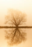 Lonely tree by the lake in sunrise Stock Photography