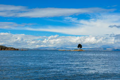 Lonely Tree on Lake Titicaca, Bolivia Royalty Free Stock Image