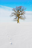 Lonely tree on the land. Stock Photo