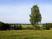 Lonely tree. A landscape. Lonely tree on a background of the blue sky. A landscape Royalty Free Stock Photos