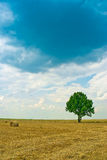 Lonely tree in the landscape. Spring tree in yellow countryside field under cloudscape Stock Images