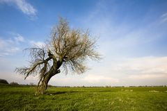 Lonely tree in landscape royalty free stock photo