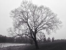 Lonely tree. In landscape Royalty Free Stock Photo