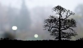Lonely tree landscape Royalty Free Stock Photography