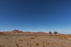 Lonely tree landscape with shrubs and red dunes in the Namibia desert. Sossusvlei. Africa stock photography