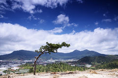 Lonely tree. With Langbiang mountain behind in Dalat, Vietnam royalty free stock image