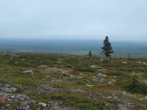 Lonely tree in Lapland landscape panorama Royalty Free Stock Images
