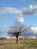 Lonely tree without leaves in late autumn in field. Infinite blue sky with clouds. Stock Photo