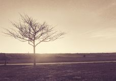 Lonely Tree. A lifeless looking tree at a park in Colorado at sunset Royalty Free Stock Photography