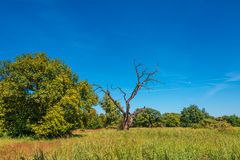 Lonely tree and like savanna landscape, gorgeous nature in Germa Stock Images