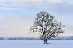 Lonely tree .Lithuania winter . stock photos
