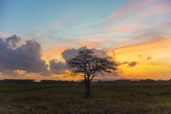 The lonely tree. In morning Royalty Free Stock Photography