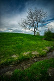 Lonely Tree on Lush, Grassy Hill. Royalty Free Stock Images