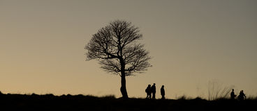 Lonely tree in Lyme Park,Englane Cheshire Autumn day. Stock Photography