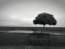 Lonely tree at a marina with an ocean view. With some grass garden, a lonely empty bench and a dog running Royalty Free Stock Photo