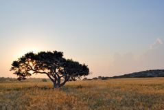 Lonely tree on a meadow Stock Photos