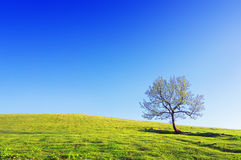 Lonely tree on meadow against blue sky Stock Photography