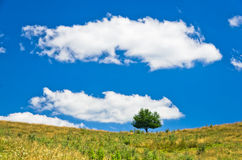 Lonely tree on a meadow against blue sky and white clouds, southwest Serbia Stock Photography