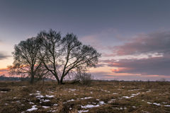 Lonely tree in a meadow Stock Images