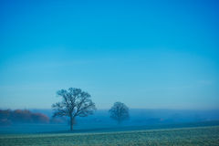 Lonely tree. On a meadow on a misty autumn day Royalty Free Stock Photos