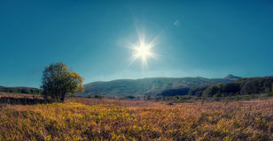 Lonely tree on meadow an mountain landscape with sunlight. Stock Photography