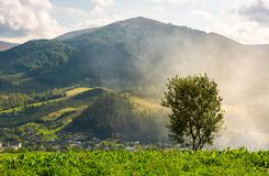 Lonely tree on the meadow in smoke. Temnatyk mountain in the distance under the cloudy afternoon sky. beautiful landscape of mountainous Carpathian countryside stock image