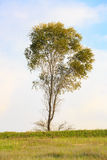 Lonely tree in a meadow Stock Photos