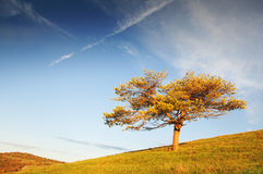 Lonely tree in the meadows and blue sky. Lonely tree in the meadows and blue cloudy sky Stock Image