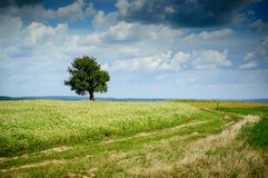 A lonely tree stock photos