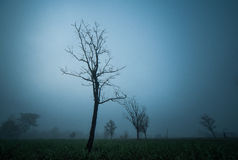 Lonely tree. In the middle the field. Makes lonely emotional Royalty Free Stock Image