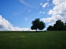 Lonely tree on the middle of a field stock photos