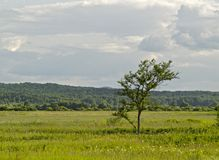 Lonely tree in the middle of a meadow Royalty Free Stock Photos